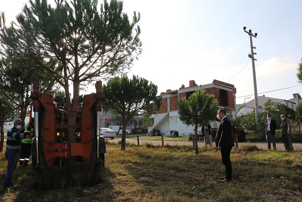 Bayramiç Belediyesi ağaçları kesmedi, taşıdı